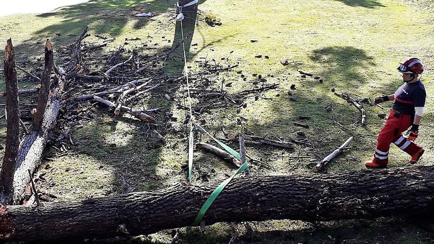 Retirados árboles en mal estado para evitar su caída en caso de mal tiempo