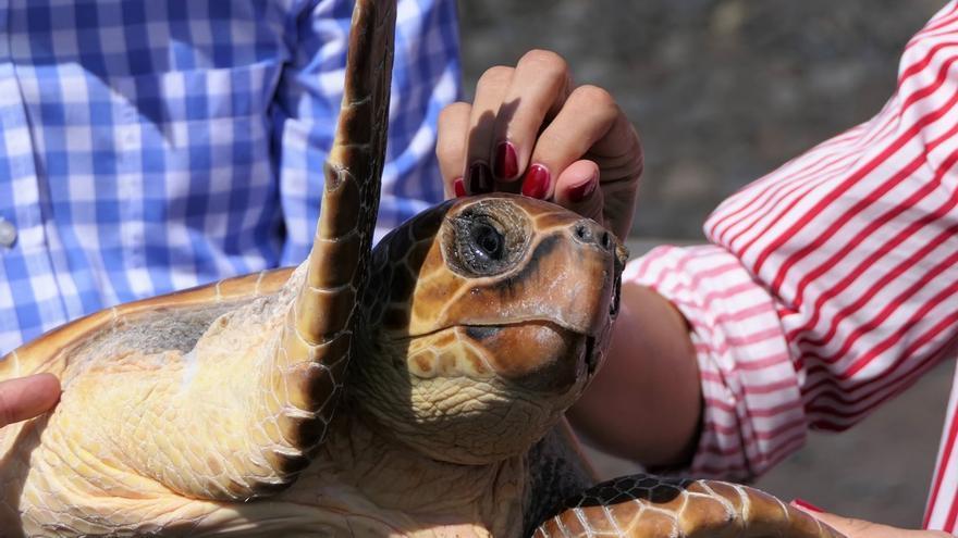 Liberan tres tortugas bobas en El Hierro