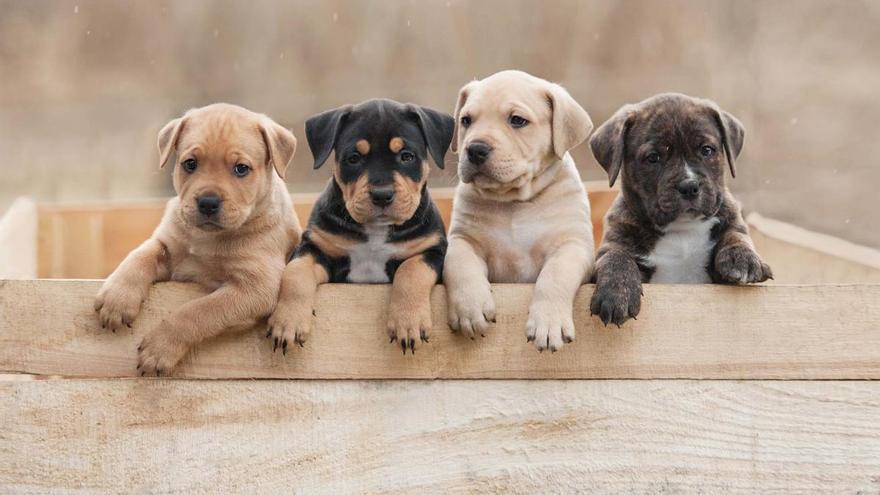 La mitad de los perros que se regalan en Navidad son después abandonados