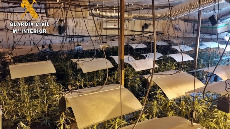 Seis detenidos y 1.100 plantas de marihuana intervenidas en un gimnasio de Mérida