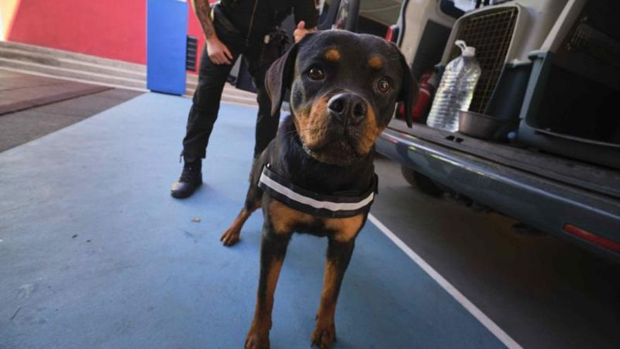 Diva, la cachorra policía de Santa Cruz