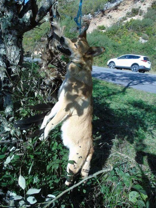 Perro y buitre colgados en Lena