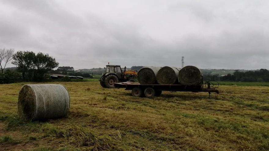 Nueve mil agricultores zamoranos reciben 5,7 millones de la liquidación de la PAC 2020