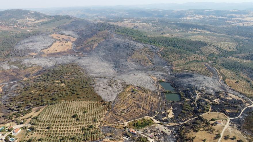 La Junta pide al Gobierno incluir los incendios de Alcaracejos y Cabra en las ayudas