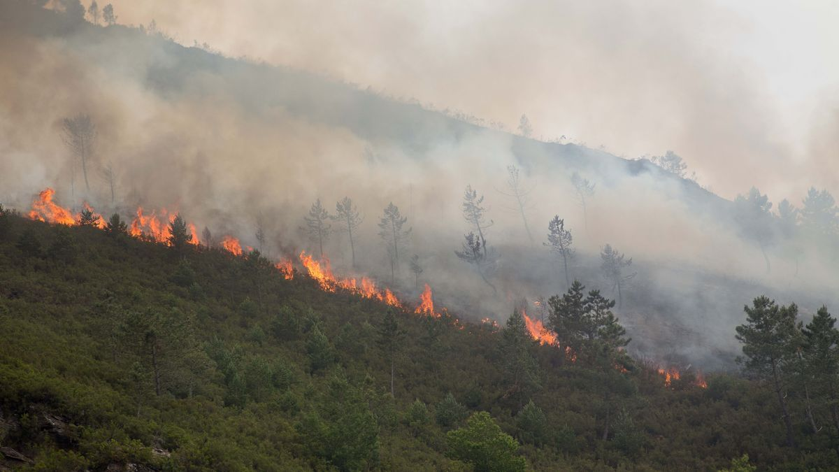 Labores de extinción del incendio forestal que se originó en la contorna de la localidad de Ferreirós de Abaixo, en el municipio de Folgoso do Courel.