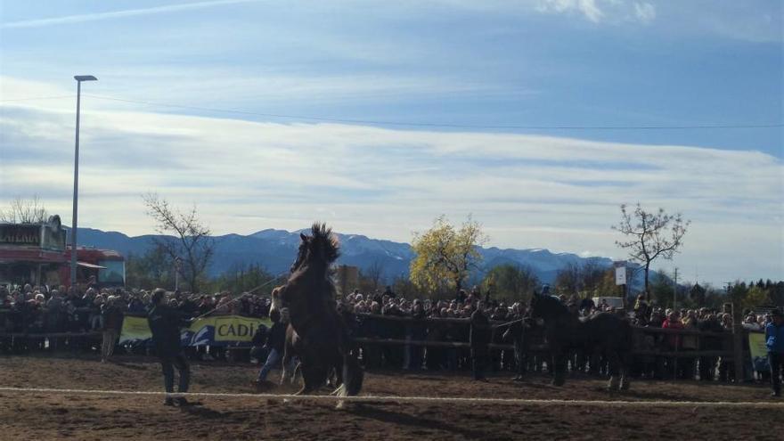 Els cavalls omplen el recinte firal de Puigcerdà en la seva històrica Fira Ramadera