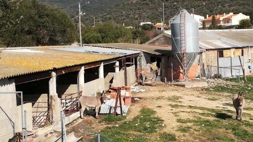 El jutjat ordena la clausura d'una granja de porcs de Cantallops