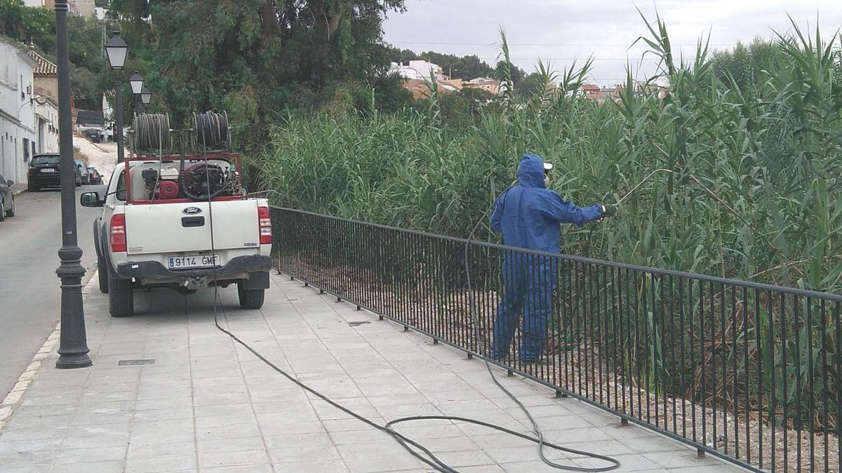 Trabajos en el cañaveral de Río de Oro en Puente Genil.