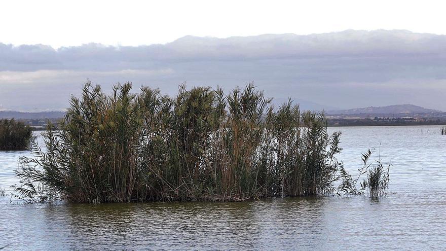 Panorámica del lago y visor cartográfico de la Generalitat donde se  aprecian los puntos de muestreo.   M. A. MONTESINOS