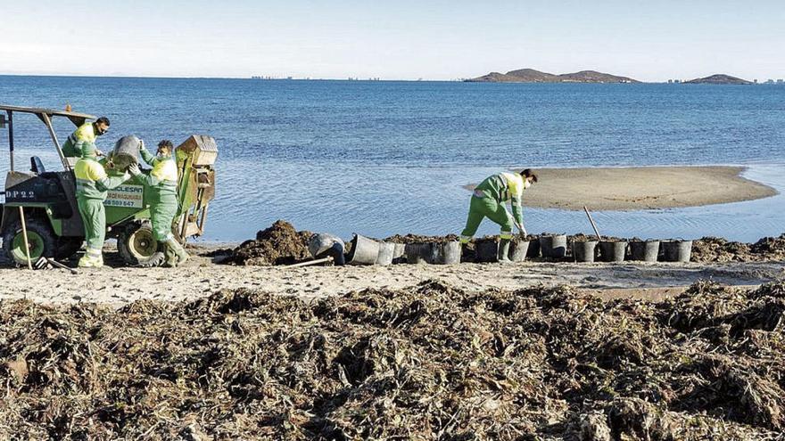 Una limpieza minuciosa para no acabar con la vida del Mar Menor