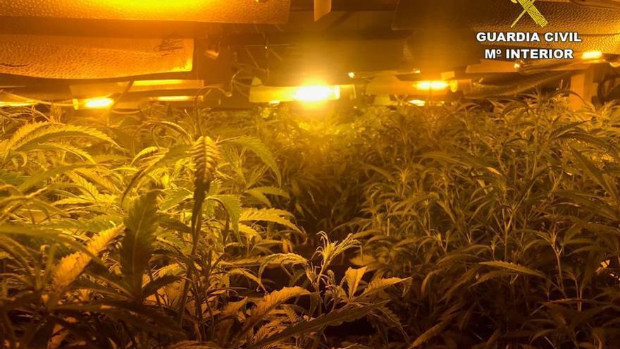 Un padre y su hijo, detenidos por cultivar en Xàbia 422 plantas de marihuana