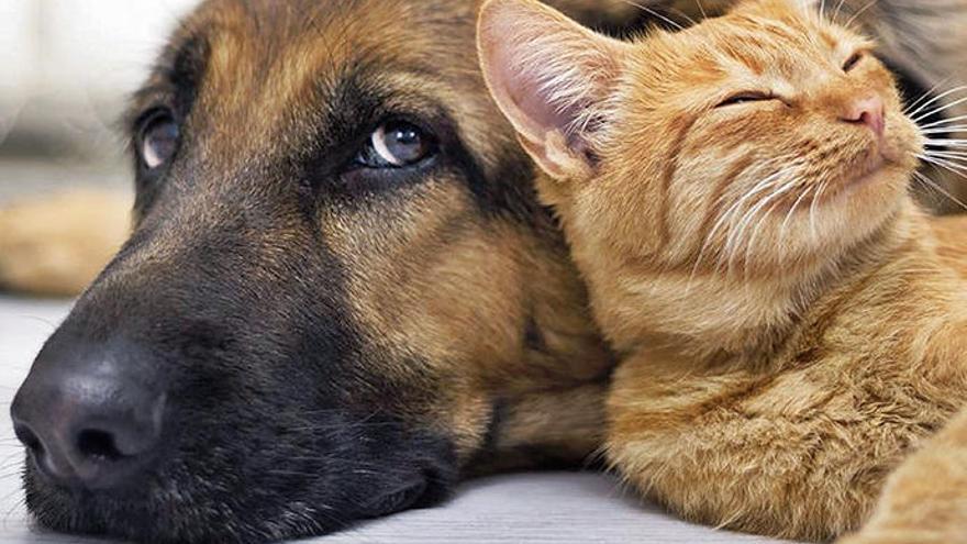 SOS Animal lädt zur Tierparty auf Mallorca ein