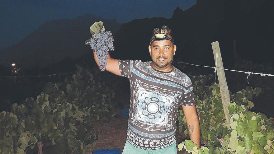 Los viticultores esperan superar la producción de uva del pasado año