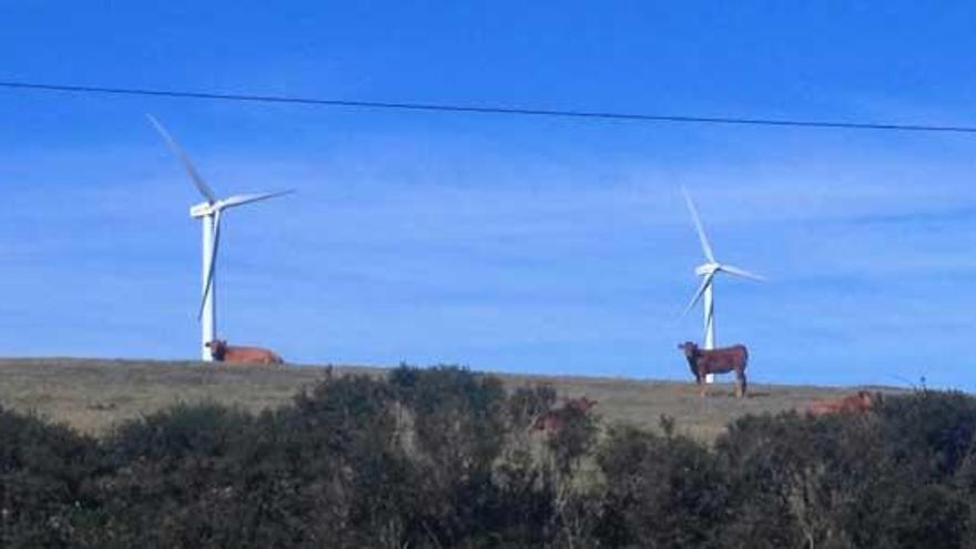 El parque eólico entre Negreira, Outes y Mazaricos, a exposición pública
