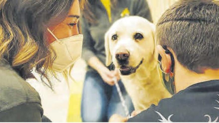La Fundación Acavall trabaja con animales para atender a menores  expuestos a la violencia machista