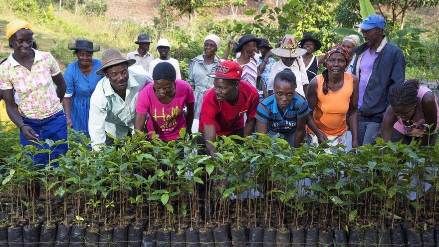 """Plantar árboles """"digitales"""" con fines socioambientales"""