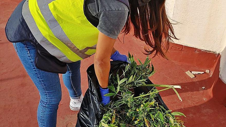Intervienen decenas de  plantas de marihuana en un balcón de Palma