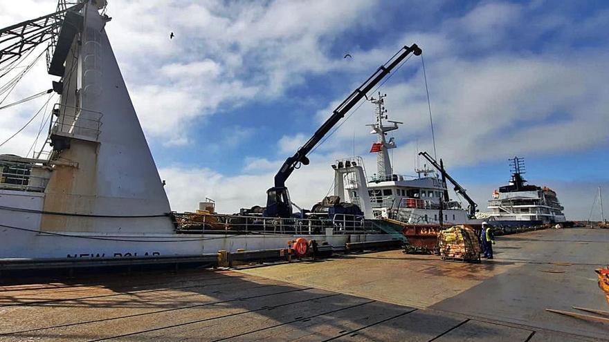 El primer calamar pescado en Malvinas enfila la ruta hacia el puerto de Vigo