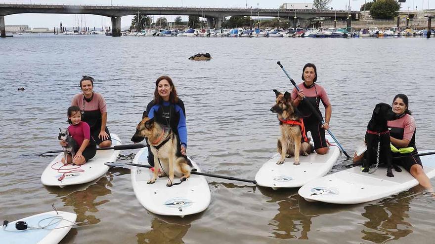 Perros al agua... en tablas de surf