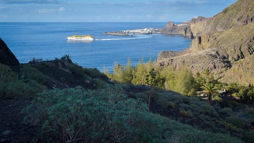 Aprueban los planes de recuperación de dos especies amenazadas en Gran Canaria