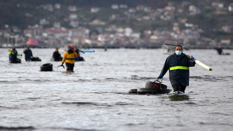Detectados 16 positivos entre mariscadores de tres cofradías de la ría de Pontevedra