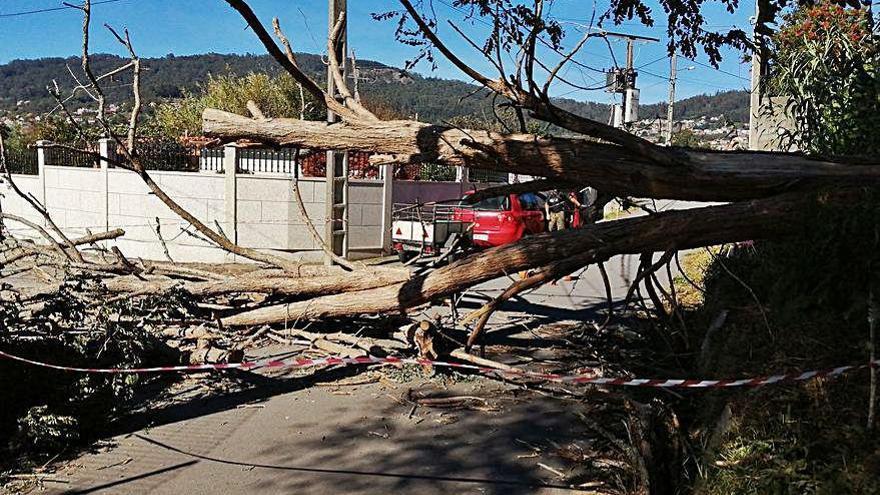 La caída de una acacia deja sin teléfono y luz a vecinos de Pombal y Reibón