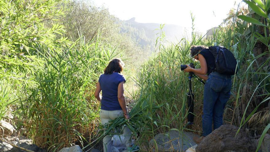 Gran Canaria visibiliza el papel de la mujer en los espacios ambientales y forestales