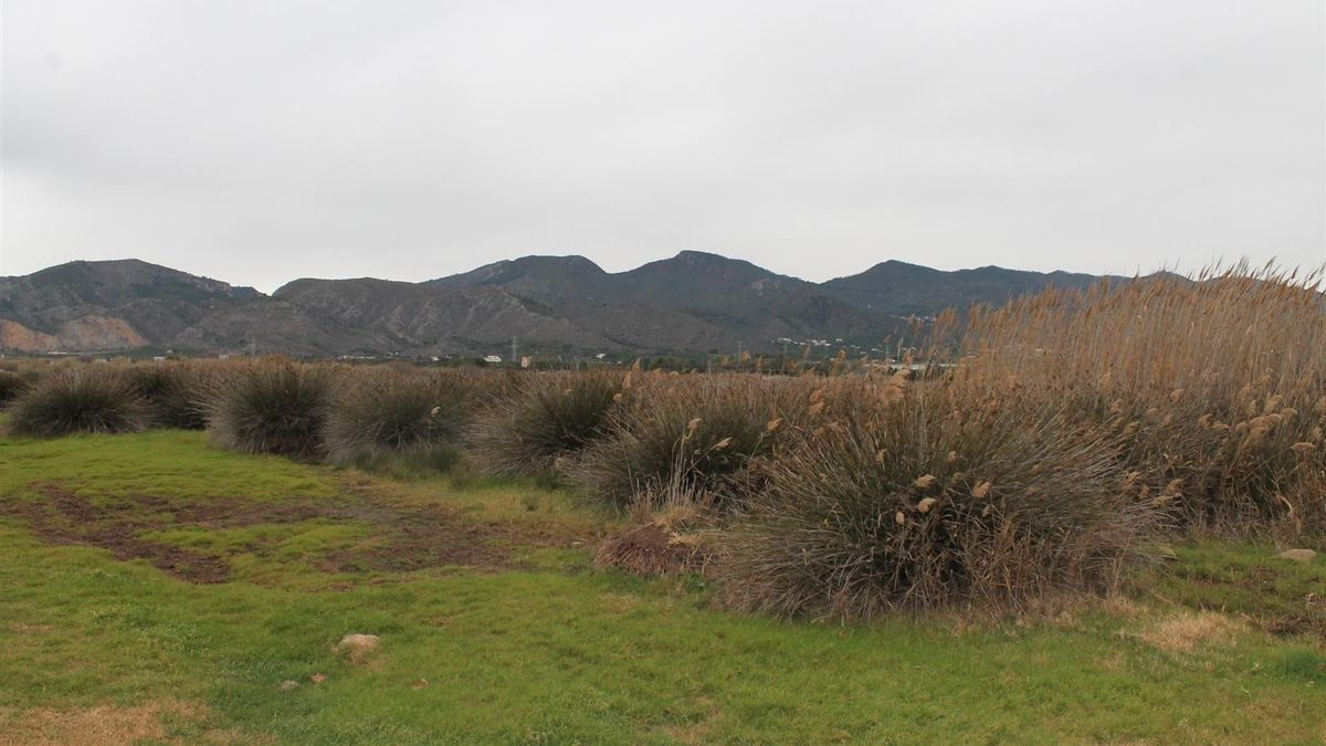 Imagen de uno de los terrenos en los que estaba proyectado, desde hace 23 años, el PAI Benicasim Golf.