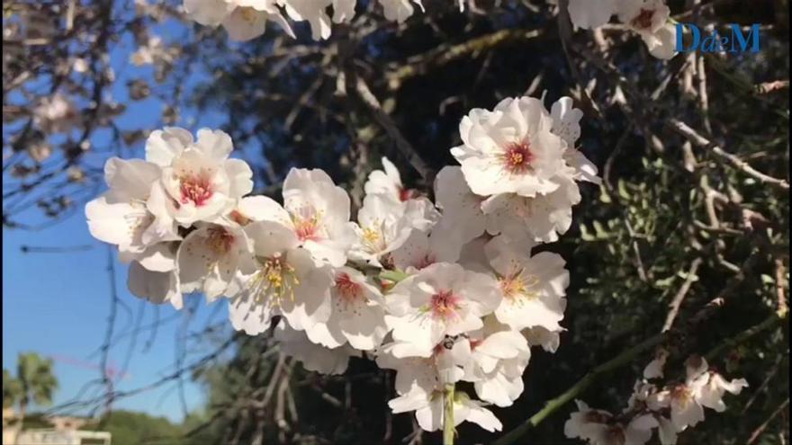 Mandelblüte: Der zarte Zauber beginnt!