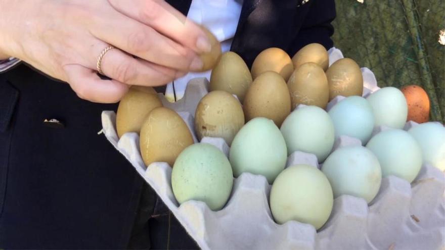 ¿Sabías que hay huevos azules?