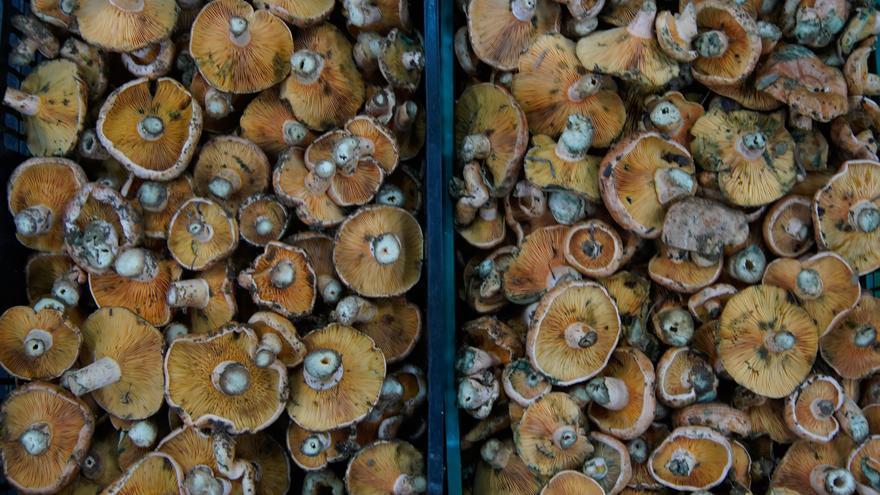 El Ayuntamiento de Rabanales sortea una cesta de productos alistanos