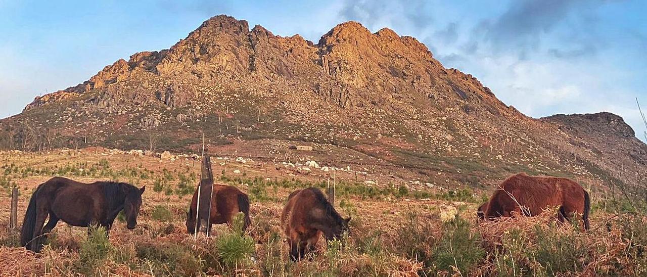 Caballos salvajes en la cara sur  del Monte Galiñeiro, en Morgadáns.