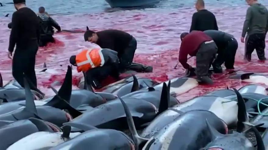 1.500 delfines han sido masacrados por los pescadores de las Islas Feroe