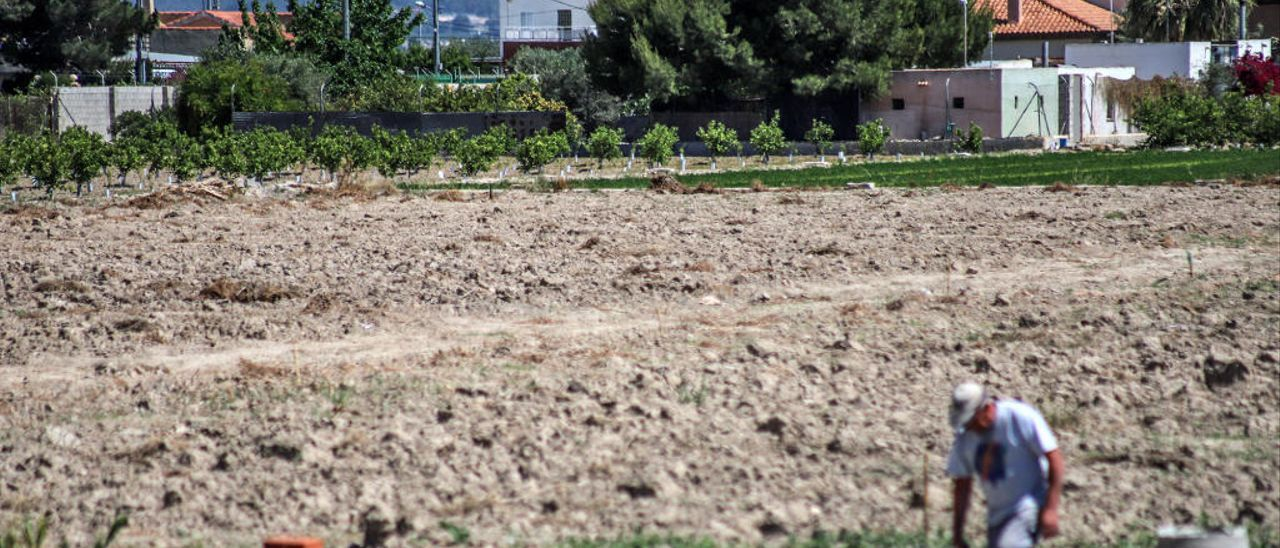 Un agricultor en terrenos de cultivo abandonados en la población de Catral, en la Vega Baja.