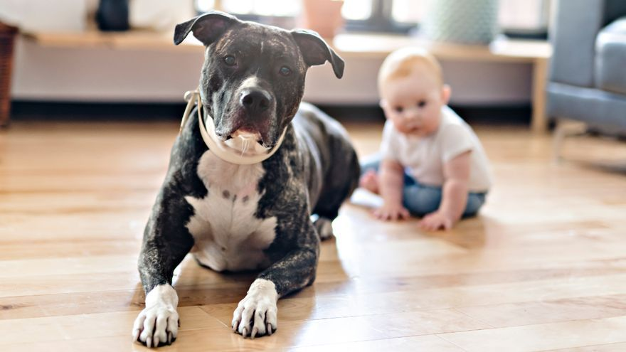 Estos son los perros más peligrosos para los niños