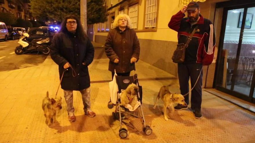 Setenta perros y tres cacatúas, en un piso de 70 metros cuadrados en Alicante