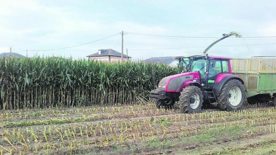 """La gestión de las tierras de cultivo en Asturias, un """"hiperproblema"""" para la UE"""