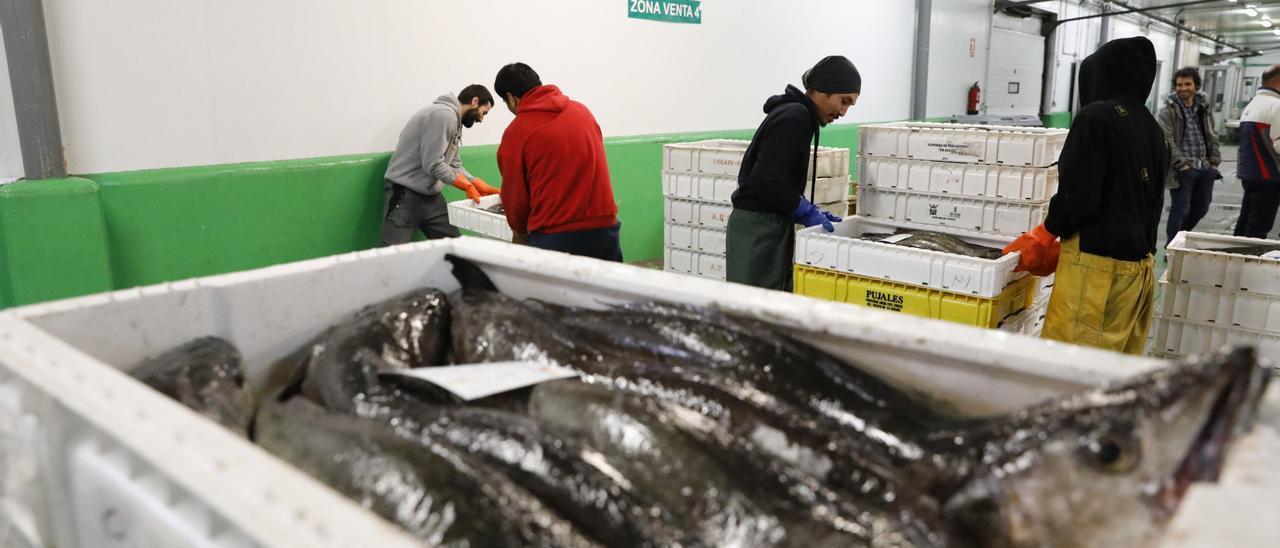 Cajas de merluza listas para su venta en la rula de Avilés.