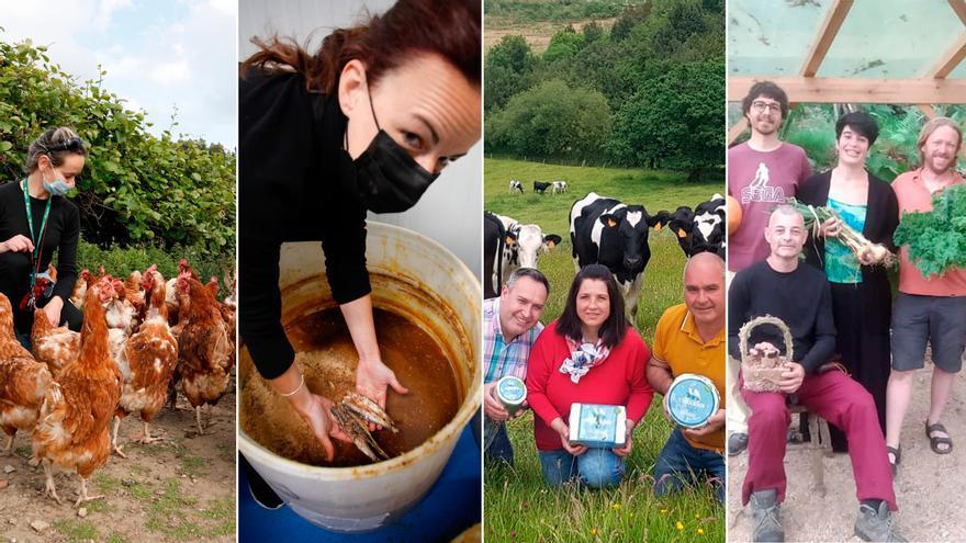 De las anchoas a las gallinas o el queso azul: cuatro historias que demuestran que en Asturias se puede vivir del campo