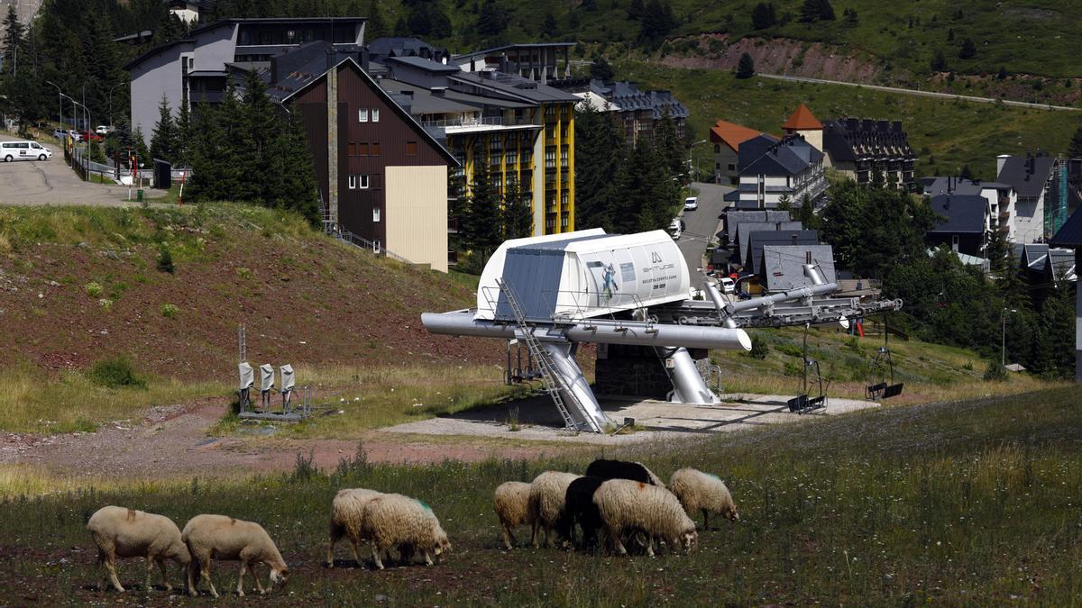 Las ovejas pastan delante del telesilla de la estación de Candanchú