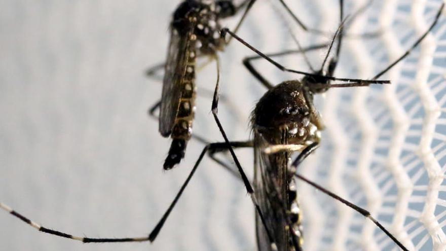 Confirman un segundo caso de malformación en un feto por zika