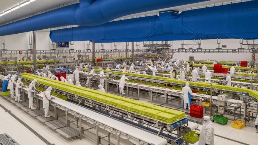 Noel inverteix 35 milions d'euros en una nova planta de productes frescos a Olot