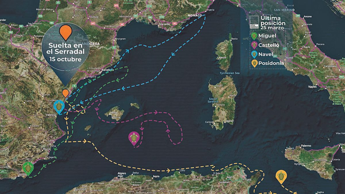 Quatre tortugues porten cinc mesos recorrent la Mediterrània