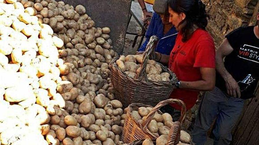 COAG advierte de un posible desabastecimiento de patatas
