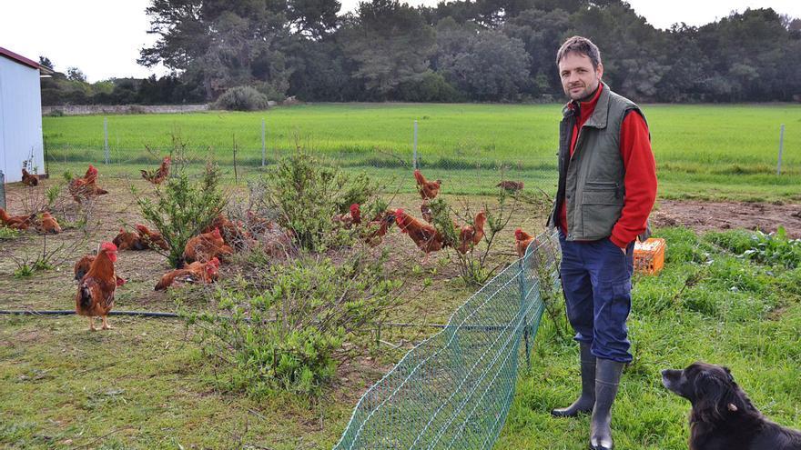 La paralización del único matadero de aves en Mallorca amenaza la continuidad de las granjas de pollos