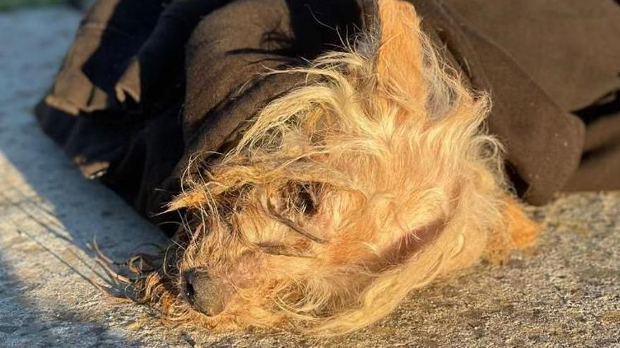 Rescatado un perro en un contenedor de Valcabado