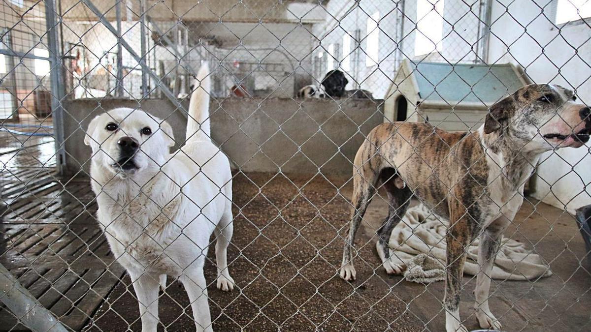 Instalaciones de la protectora de animales en el polígono de Los Llanos.