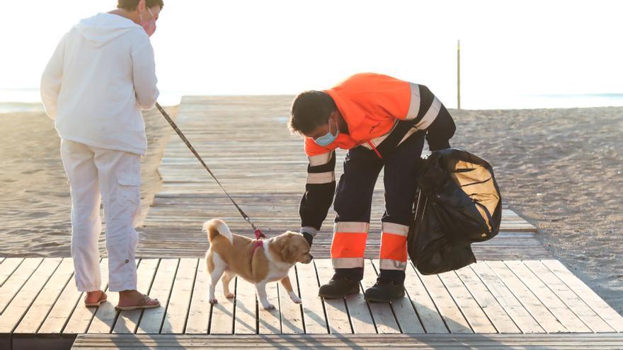 ¿Sabes cuántos excrementos de perros se recogen al día en Alicante?