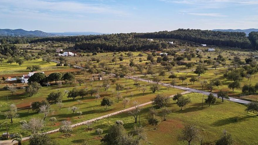 La agricultura ecológica de Ibiza se duplica en la última década