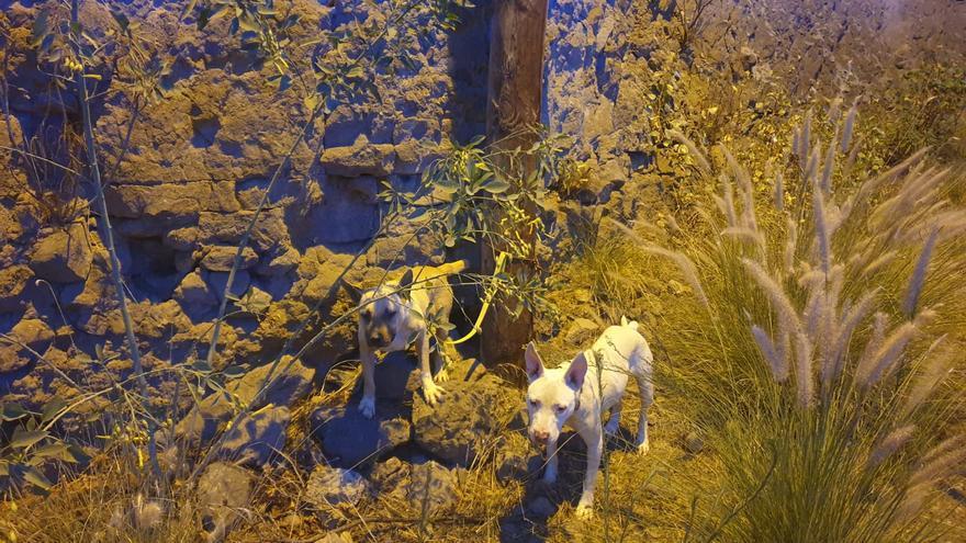 Abandonan y atan a unos perros en las inmediaciones del barranco Guiniguada